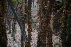 Una vieja yarda abandonada Fotografía de archivo libre de regalías