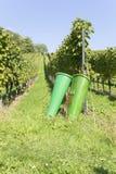 Una vigna con i canestri di raccolto nella priorità alta, rttemberg del ¼ di Baden WÃ, Germania Immagini Stock