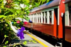 Una violeta en una estación de tren Fotografía de archivo libre de regalías