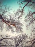 Una visión desde la tierra al cielo y a los flores de árboles, encima de un árbol es una jerarquía del ` s del pájaro Fotos de archivo libres de regalías