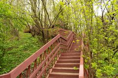 una visión, mirando para arriba para el top de una escalera de madera larga situada en una pieza del bosque de una pista de sende foto de archivo