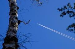 Una visión a través de los árboles en el avión de pasajeros con los condens arrastra el vuelo Imágenes de archivo libres de regalías