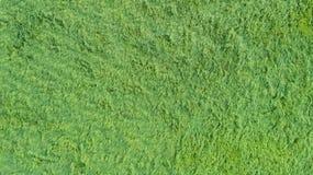 Una vista aérea de un remiendo grande de alguna hierba recientemente cortada, sana, verde foto de archivo libre de regalías