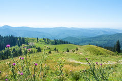 Una vista ai mountais di Carpatian, alla foresta dell'abete una valle verde e Immagine Stock Libera da Diritti