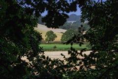 Una vista attraverso gli alberi che rivelano il paesaggio di Devon England fotografia stock