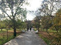 Una vista attraverso un parco in autunno Immagine Stock