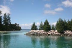Una vista bella degli abeti sul mare Fotografia Stock