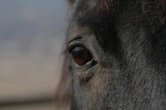 Una vista da un cavallo. Fotografia Stock Libera da Diritti