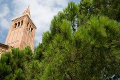 Una vista dall'albero Fotografie Stock