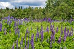 Una vista de árboles y de flores en el bosque imagenes de archivo