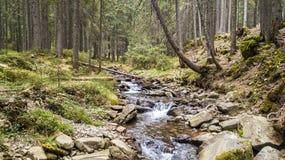 Una vista de una corriente de la montaña que fluye abajo de una cuesta de piedras Imagenes de archivo