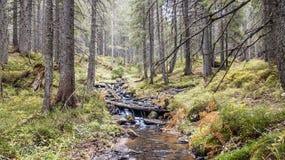 Una vista de una corriente de la montaña que fluye abajo de una cuesta de piedras Fotografía de archivo libre de regalías