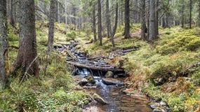 Una vista de una corriente de la montaña que fluye abajo de una cuesta de piedras Foto de archivo libre de regalías
