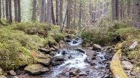 Una vista de una corriente de la montaña que fluye abajo de una cuesta de piedras Foto de archivo