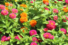 Una vista de flores Imagen de archivo libre de regalías