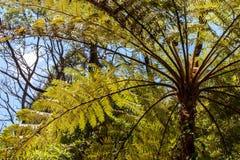 Una vista de la base de las hojas de palmeras con la luz hermosa del sol imágenes de archivo libres de regalías