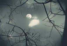 Una vista de la luna a través de ramas deshojadas fotografía de archivo libre de regalías