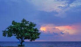Una vista de la luz del sol entre las nubes y el único árbol por el mar fotos de archivo libres de regalías
