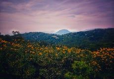 Una vista de la naturaleza hermosa del top de la colina imagenes de archivo