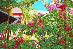 Una vista de la piscina a través de los arbustos La India Fotos de archivo
