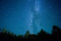 Una vista de las estrellas de la vía láctea con los árboles de un pino en el primero plano Lluvia de meteoritos de Perseid en 201 imagen de archivo