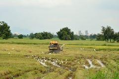 Una vista de los campos del arroz Imagenes de archivo
