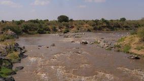 Una vista de los rápidos famosos de Mara River With Brown Water en África metrajes