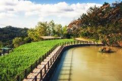 Una vista de una plantación de té en las colinas de Maokong en Taiwán Foto de archivo libre de regalías