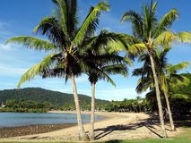 Una vista de una playa en Queensland con las palmeras Foto de archivo libre de regalías