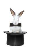 Una vista de un conejo con la pajarita en un sombrero fotos de archivo libres de regalías