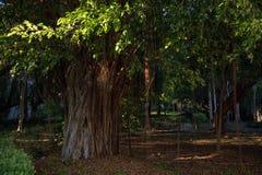 Una vista de un parque verde Foto de archivo