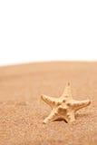 Una vista de una estrella de mar en una playa arenosa Fotos de archivo libres de regalías