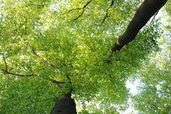 Una vista degli alberi dal basso verso l'alto Immagini Stock