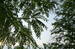 Una vista dei modelli frondosi dagli alberi nel cielo fotografia stock