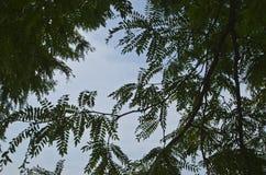 Una vista dei modelli verdi frondosi dagli alberi nel cielo immagine stock libera da diritti