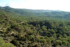 Una vista del bosque de hojas caducas y conífero mezclado en las montañas de Troodos de Chipre foto de archivo libre de regalías