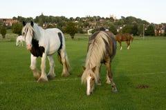 Una vista del campo común del oeste, Lincoln, Lincolnshire, Reino Unido Fotos de archivo libres de regalías