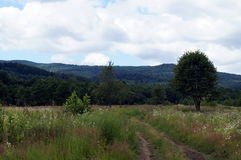 Una vista del campo con alta erba Fotografie Stock Libere da Diritti