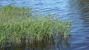 Una vista del día del lago en junio almacen de metraje de vídeo