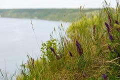 Una vista del fiume e della collina Nell'erba e nei fiori della priorità alta Immagini Stock