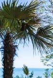 Una vista del mar y de la palmera en una playa Fotos de archivo