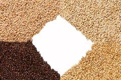 Una vista del primo piano di 4 generi di grani del malto Ingrediente per birra BAC fotografia stock