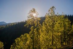 Una vista del sol a través de los árboles fotos de archivo