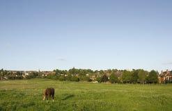 Una vista del terreno comunale ad ovest, Lincoln, Lincolnshire, Regno Unito Fotografie Stock Libere da Diritti