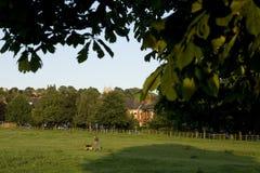 Una vista del terreno comunale ad ovest, Lincoln, Lincolnshire, Regno Unito Fotografia Stock Libera da Diritti