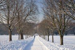 Una vista del viale dell'albero al museo ed ai giardini elisabettiani di Wollaton Corridoio nella neve nell'inverno a Nottingham, fotografie stock