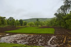 Una vista dell'azienda agricola del riso nella regione konkan di India fotografie stock libere da diritti