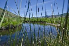 Una vista dell'insenatura scorrente calma fresca attraverso l'erba alta Immagini Stock