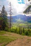 Una vista della catena montuosa di Tatra Nella priorità alta, erba verde Immagini Stock