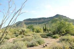 Una vista della montagna del passaggio in Arizona Fotografia Stock